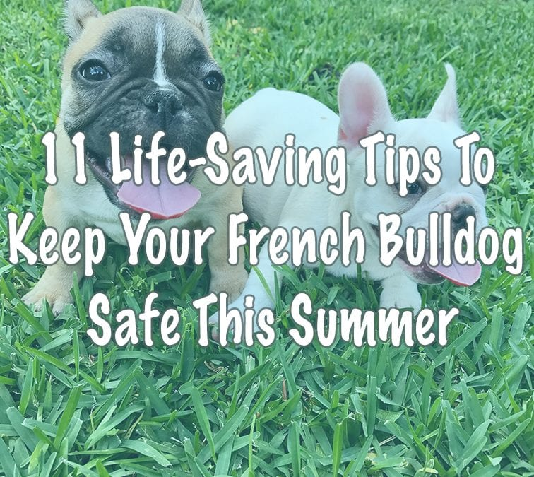 11 Life-Saving Tips To Keep Your French Bulldog Safe This Summer