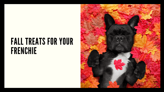 Fall Treats for your Frenchie