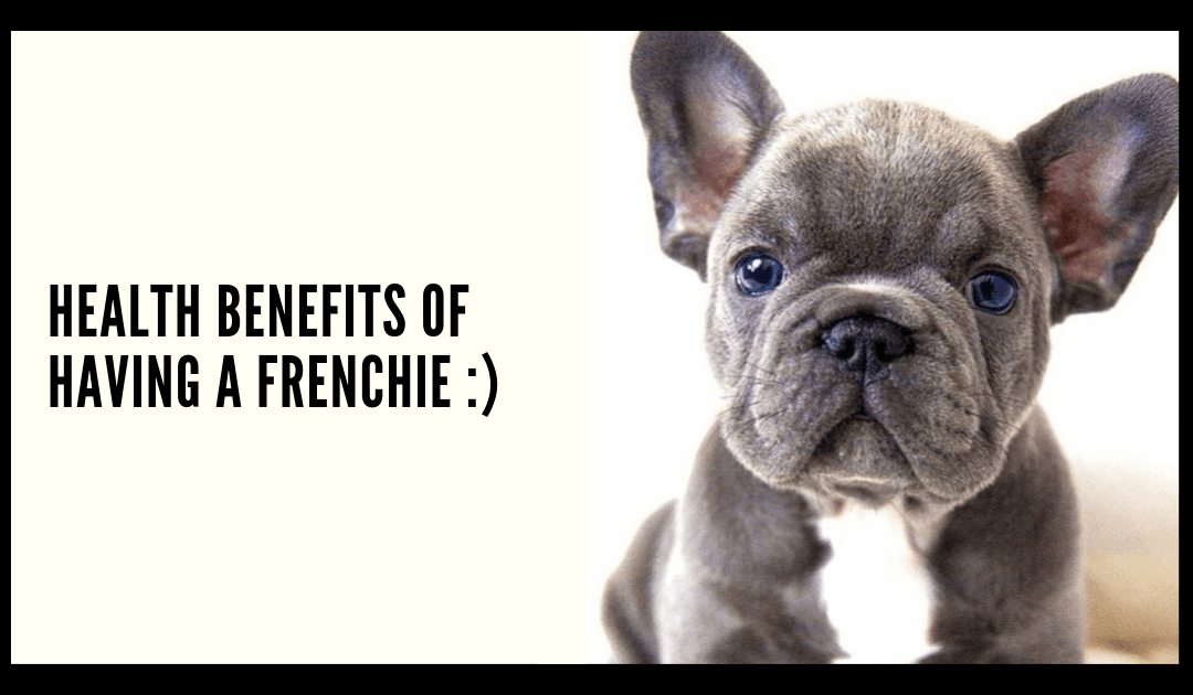 Health Benefits of Having a Frenchie :)