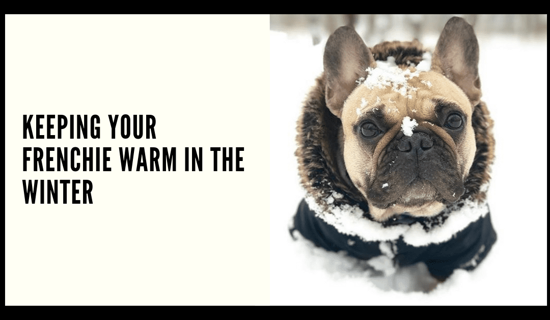 Keeping your Frenchie Warm in the Winter