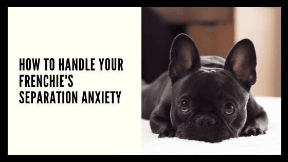 How to Handle your Frenchie's Separation Anxiety