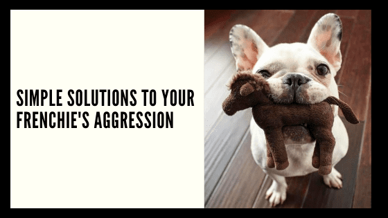 Simple solutions to your Frenchie's Aggression