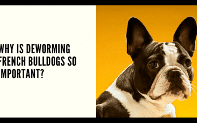 Why is Deworming French Bulldogs so Important?