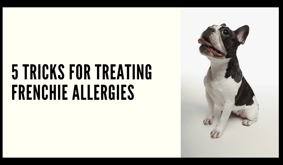 5 TRICKS FOR TREATING FRENCHIE ALLERGIES