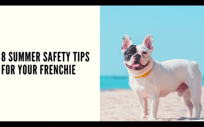 8 Summer Safety Tips for your Frenchie