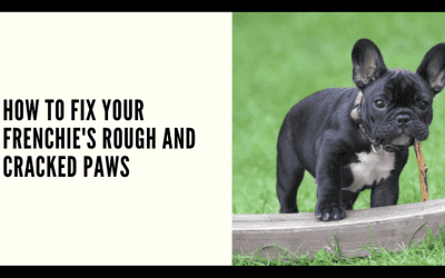 How to Fix your Frenchie's Rough and Cracked Paws?