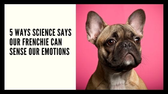 5 Ways Science Says Our Frenchie Can Sense Our Emotions