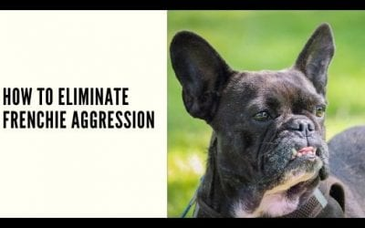 How to Eliminate Frenchie Aggression
