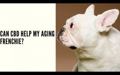 Can CBD Help My Aging Frenchie?