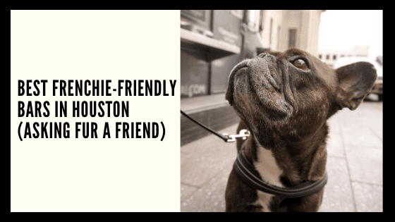 Best Frenchie-Friendly Bars in Houston (asking FUR a friend)