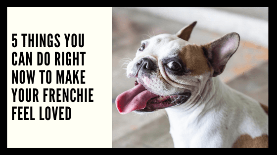 5 Things You Can Do Right Now to Make Your Frenchie Feel Loved