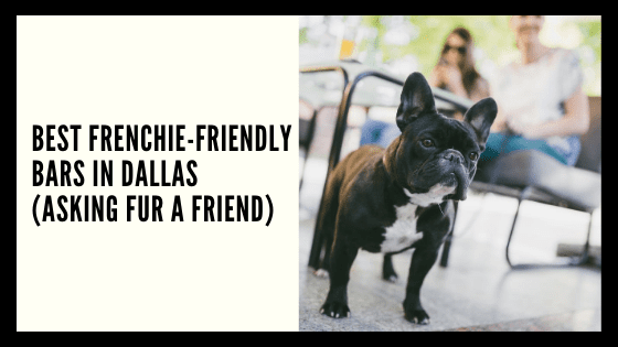 Best Frenchie Friendly Bars in Dallas (Asking FUR a Friend)