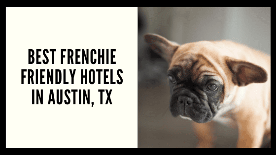 Best Frenchie Friendly Hotels in Austin, TX