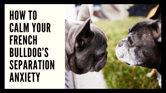 How to Calm Your French Bulldog's Separation Anxiety
