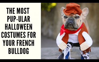 The Most Pup-ular Halloween Costumes for Your French Bulldog