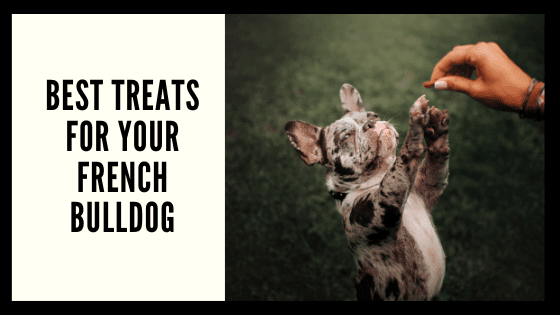 Best Treats for your French Bulldog