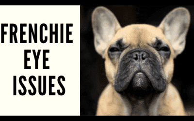 Frenchie Eye Issues