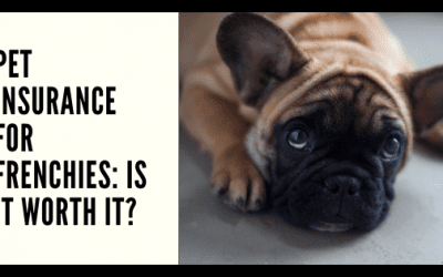 Pet Insurance for Frenchies: Is It Worth It?