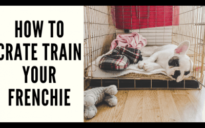 How to Crate Train Your Frenchie