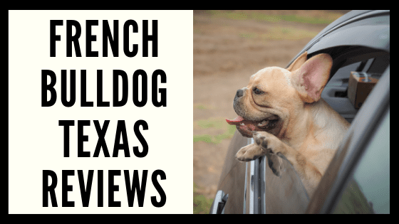 French Bulldog Texas  Reviews