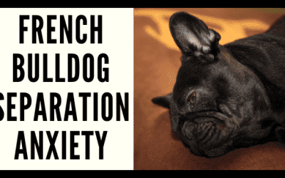 Separation Anxiety in French Bulldogs