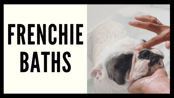 Frenchie Baths