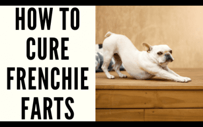 How to Cure Frenchie Farts