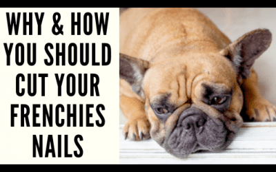 Why & How You Should Cut Your Frenchie's Nails