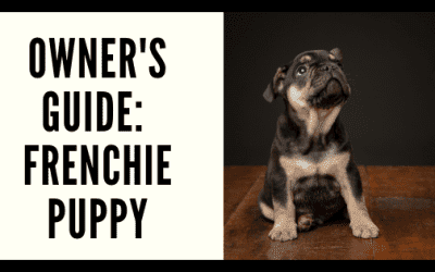 Owner's Guide: Frenchie Puppy