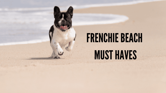 5 Frenchie Beach Must Haves