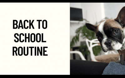 Getting your Frenchie in a Back to School Routine
