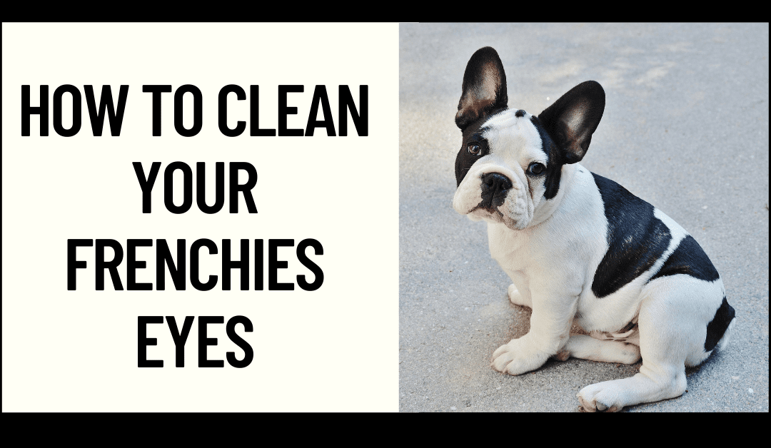 How to Clean your Frenchie's Eyes