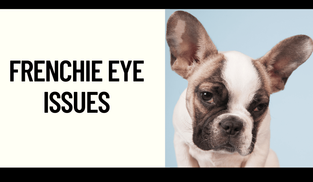 Common Frenchie Eye Issues