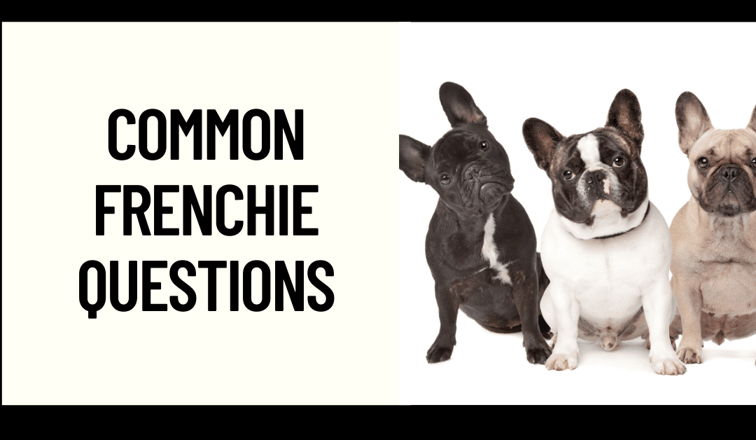 Common Questions about French Bulldogs